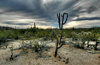 Saguaro National Park _D3X9424_5_6_7_8_tonemapped