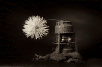 Spidermum and Lantern_D3X6265_6_7_8_9-BW