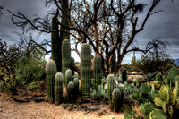 Saguaro National Park _D3X9332_3_4_tonemapped